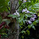 Tropical Garden Orchids by Kerryn Madsen-Pietsch