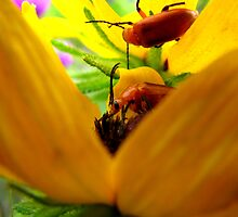 Two Beetles, Two Flowers by swaby