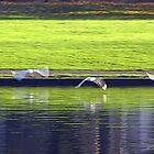 Birds by leemcpherson