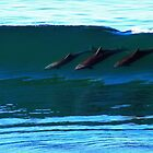 Bottlenose Dolphins Surfing by Bryce Bradford