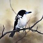 Grey Butcher Bird by Philip Holley