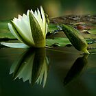 Water Lily Reflection by Elaine Short