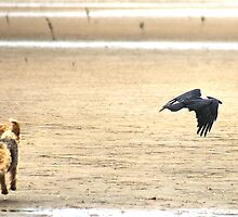 NO 7 - SPIKKELS AND THE CROW 10.49.56 HRS by Magaret Meintjes