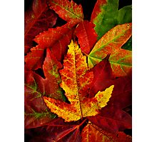 Autumn Collection Photographic Print