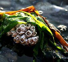Seaweed Barnacles by starlitewonder