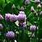 Purple and Green by swaby