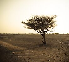 desolate by sunith shyam