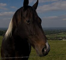 Sussex Horse by David Brown