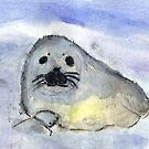 Baby Seal by RobynLee