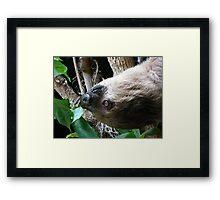 Sloth Portrait Framed Print