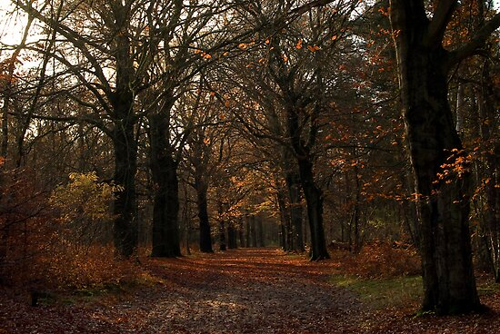 Beech lane in the woods by steppeland