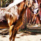 Blond Draft Horse by NancyC