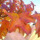 Autumn Blessings by Quinn Blackburn