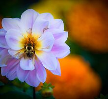 Bumble by Charles Plant