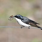 Restless Flycatcher #2 by Moorey