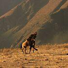 Dancing Horses by Craig Baron