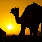 Sunset at Pushkar by Mukesh Srivastava