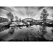 HDR Swan in black&white Photographic Print