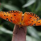 Butterfly on Finger by Adam Bykowski