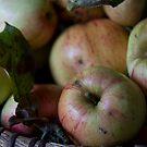 Apples by Kasia Fiszer