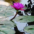 Water Lillies by BProven40