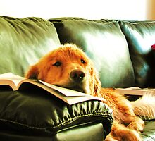 reading? or snoozing? by MadisonPalmer