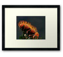 Ablaze II Framed Print