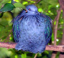 Blue Pigeon Stuffed by GolemAura