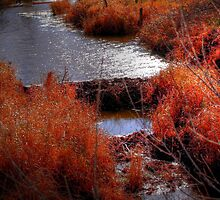 Autumn Grasses  by Larry Trupp