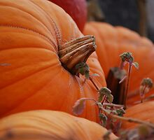 Pumpkin Time by Rowan  Lewgalon