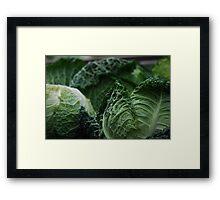 Savoy Cabbage Framed Print