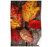 A Touch of The Autumnal Poster