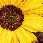 SunFlooer by ellylucas
