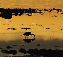 Heron Morning by Al Williscroft