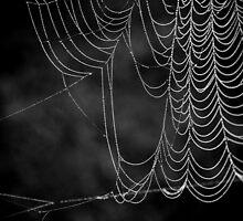 Web by Caitlyn