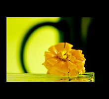 yellow flower macro nature by jayantilalparma