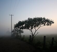 Foggy Morning by Jodie Bennett
