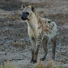 Hyena by Jared Bloom