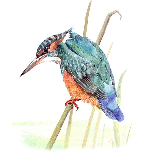 Kingfisher by Maureen Sparling