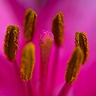 Stamen by Trevor Kersley