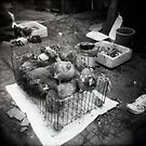 chicken little by Leanne Smith