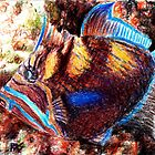 Queen Triggerfish by robertsloan2