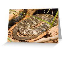 Eastern Tiger Snake, Queensland, Australia Greeting Card
