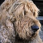 ..an otterhound.. by Lynne Prestebak