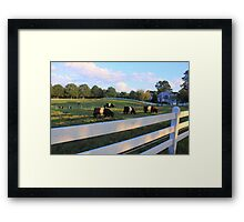 Cows Grazing In Grass Framed Print