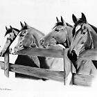 Horse Corral by J.D. Bowman