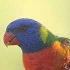 parrot picture by columboola