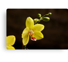orchid Canvas Print