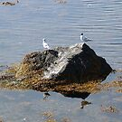 Gulls On A Rock by George Cousins