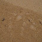 Sand blisters by GeoGecko